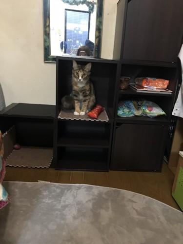 ボックスの中におもちゃと猫