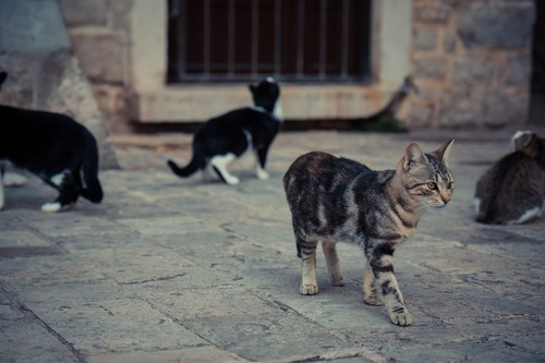 思い思いの方向に向かう猫たち