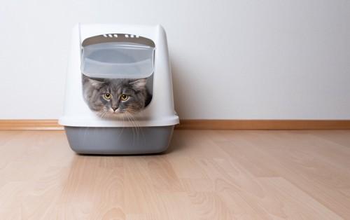 トイレの中からこちらを窺う猫