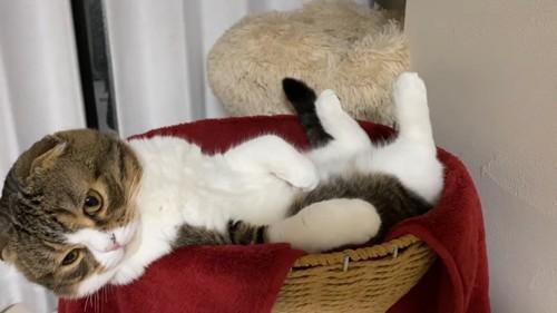 かごの中にいる猫