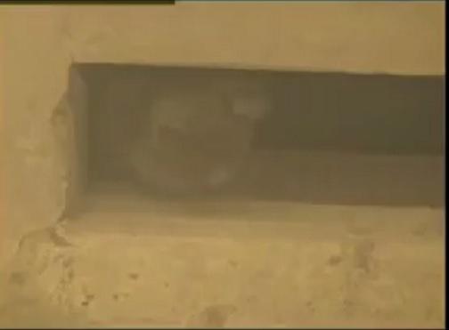 穴に隠れていた子猫