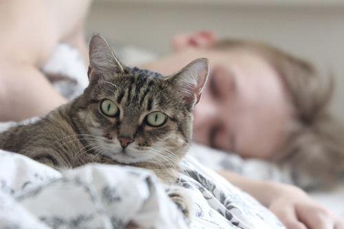 一緒に寝ているベッドで起きる猫