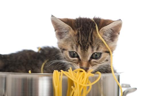 麺にからまる子猫