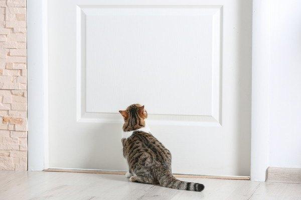 ドアの前で待っている猫