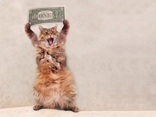 お金をかかげる猫