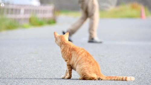 通りすがる人を見ている猫