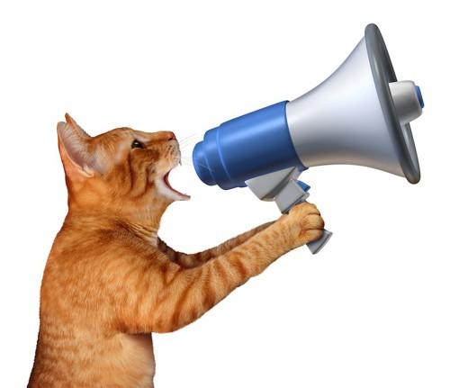 スピーカーを使って叫ぶ猫