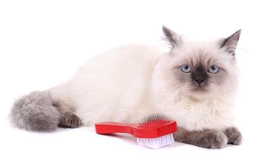 ブラシの横でくつろぐ猫