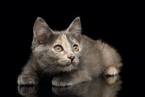 姿勢を低くして身構えている猫
