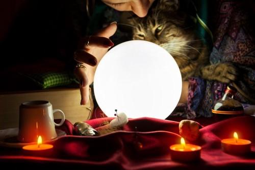 占い師と猫