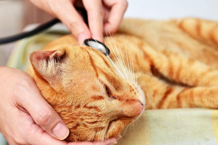 診察している猫
