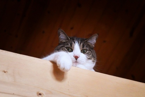高いところから偉そうに人を見る猫