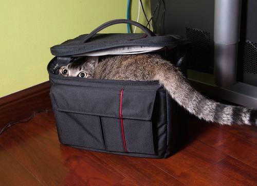 バックに隠れている猫