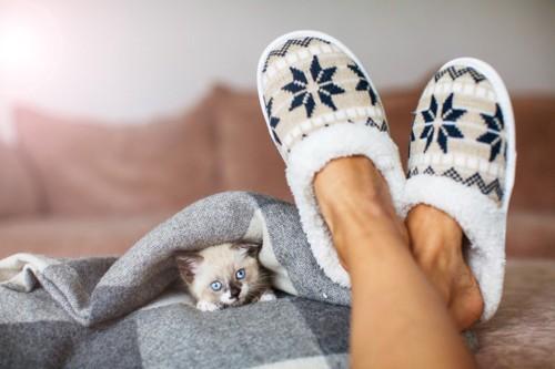 足元で毛布にくるまる猫