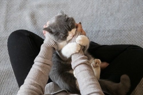 一生懸命噛む猫