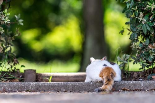 後ろ姿でしっぽを見せる猫