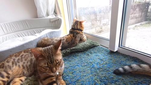 外を見る猫と目を細める猫