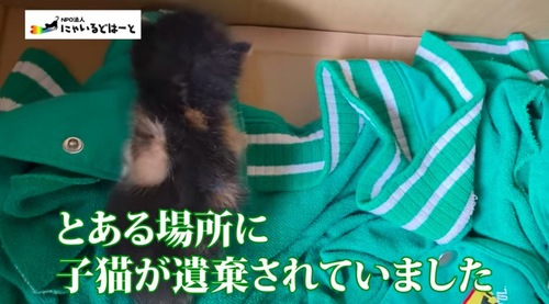 遺棄された子猫