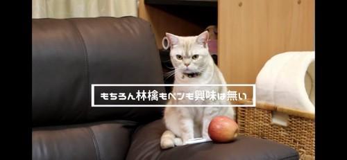 ペンとリンゴと猫