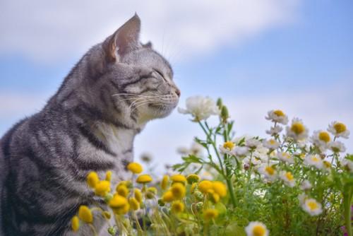 花の香を嗅ぐ猫
