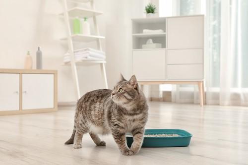 部屋に置かれたトイレの前で立ち止まって振り返る猫