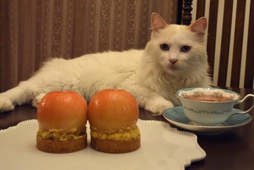 テーブルの上の豪華なティーセットと猫