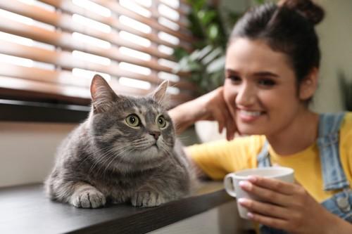 カップを持つ女性と寝そべる猫