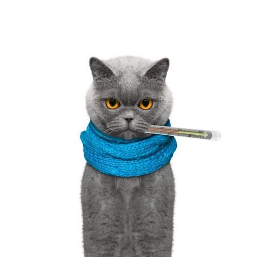体温計をくわえている猫