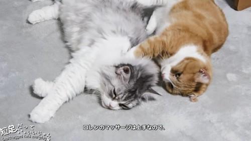 肩を揉む茶白猫