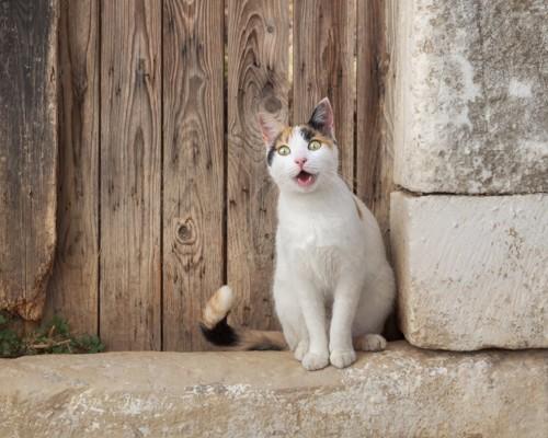 ドアの前で鳴く猫
