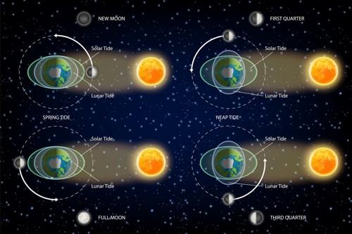 月と太陽の潮汐図