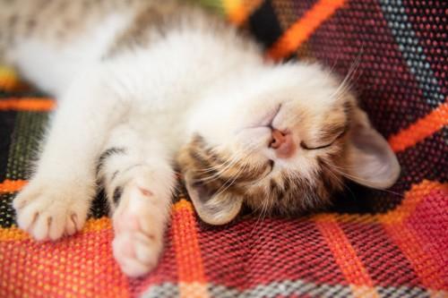 顔を上に向けて寝る子猫