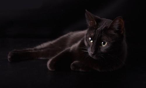 暗闇の中でくつろぐ黒猫