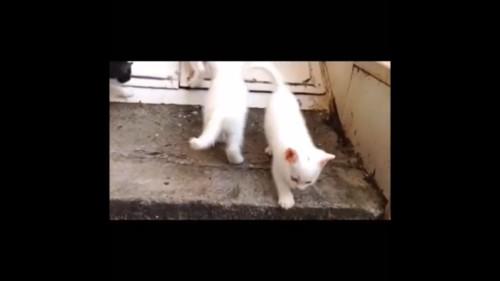 誤魔化す猫