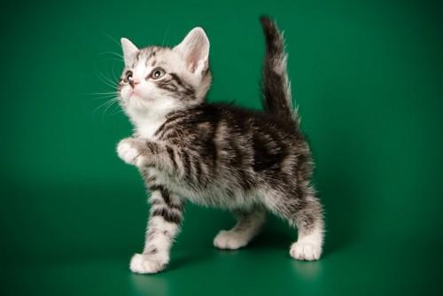 尻尾を立てて嬉しそうな子猫