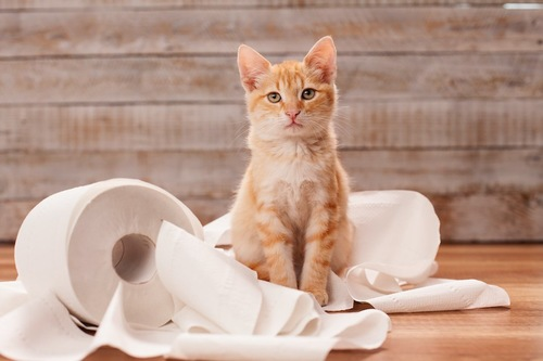 トイレットペーパーの上に座る茶トラ猫