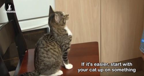 おすわりする猫