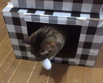 猫がボールを銜えてダンボールハウスの中に入っている