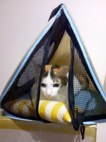 キャリーバッグに入った猫