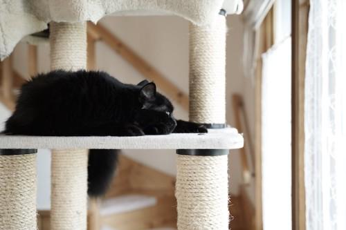 キャットタワーの上で眠る夜泣きする黒猫