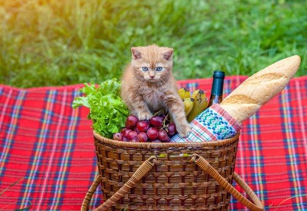 籠に入った食材に手を出す茶色い猫