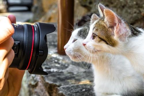写真を取られる猫達