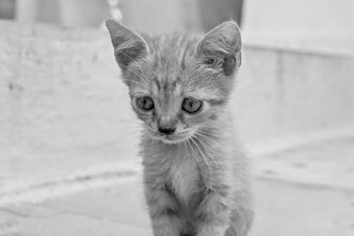 しょんぼり子猫