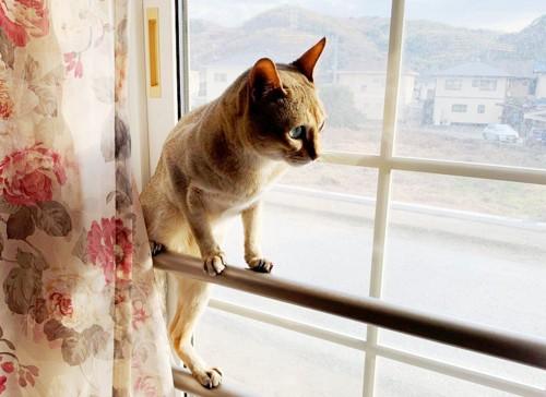 窓によじ登るシンガプーラ