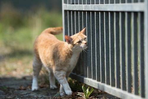 鉄の柵にマーキングする猫