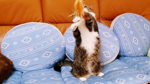 おもちゃを触る猫
