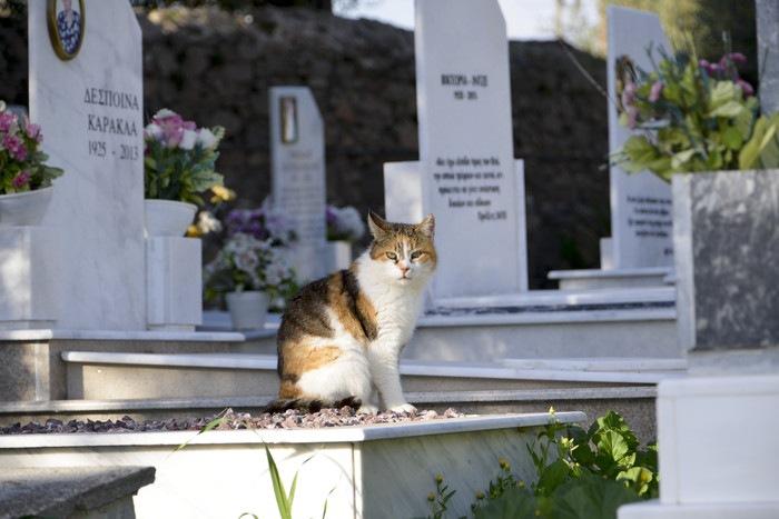 墓にいる猫