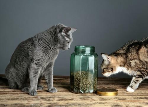 ドライフードが入ったガラスの密閉容器を見る2匹の猫