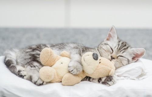 ぬいぐるみを抱いて気持ちよさそうに寝る子猫