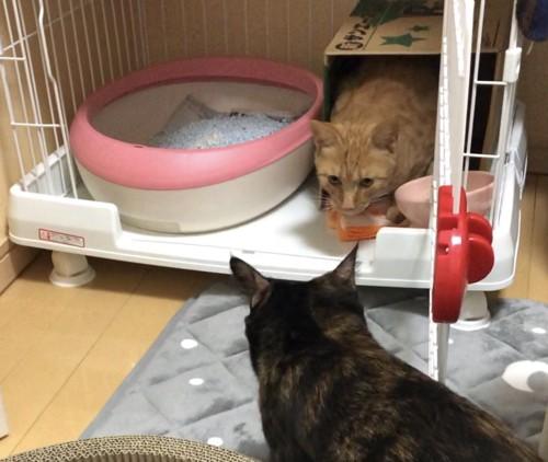 対面する猫